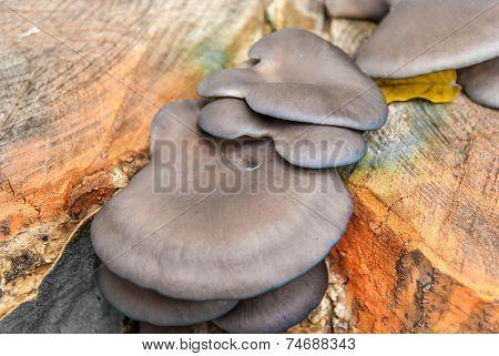 Mushrooms On Tree Trunk In Autumn