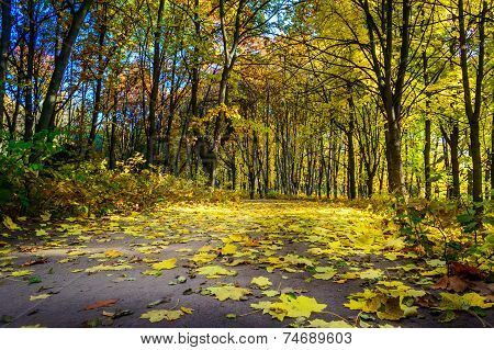 Road Covered Autumns By Foliage.