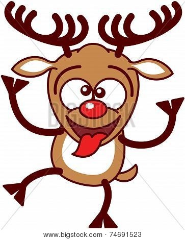 Nice Xmas reindeer making funny faces