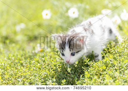 Kitty is on the background field of daisies