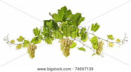 Collage Of Vine Leaves And Grapes
