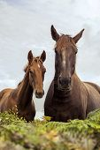 stock photo of mare foal  - Mare and foal in farm, autumn, 2014