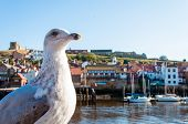 pic of dracula  - Scenic view of Whitby city and abbey in sunny autumn day - JPG