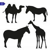 picture of camel  - Vector silhouette of giraffe camel zebra and horse - JPG