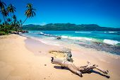 image of deserted island  - Deserted trunk on Playa Rincon beach in Dominican Republic - JPG