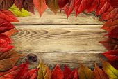 pic of creeper  - Autumn leaves frame on wooden background - JPG