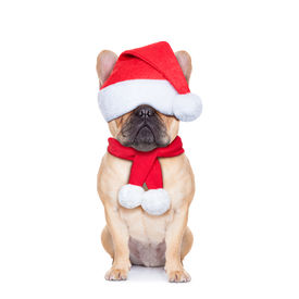 stock photo of seeing eye dog  - santa claus christmas dog with covered eyes isolated on white background - JPG