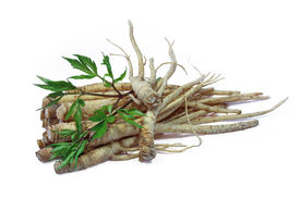 picture of ginseng  - Fresh Ginseng Root and female ginseng  - JPG