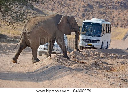 Elephant crossing a road in front a tourist bus