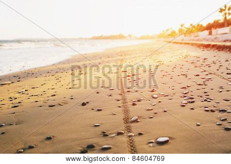 Bicycle tyre tracks on a sandy beach at sunset. Off road cycling. Active life style concept.
