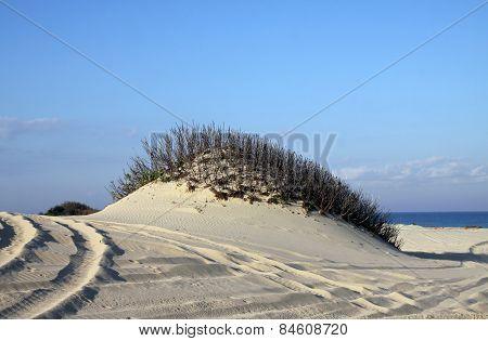 Dunes On The  Sea Shore
