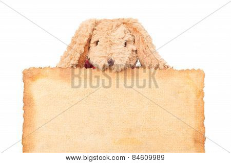Rabbit, Holding Old Grunge Canvas Fabric Burn Edge For Happy Easter Eggs Festival On White Backgroun