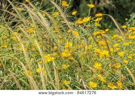 Natural Background Of Yellow Flowers And Spikes