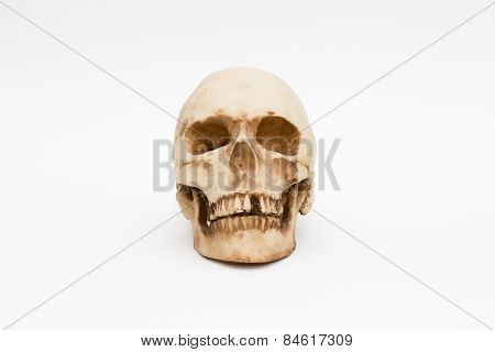 brainpan cranium death's head
