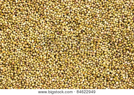 Cilantro seeds background
