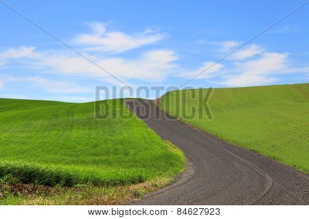 Dirt road through wheat fields in Palouse
