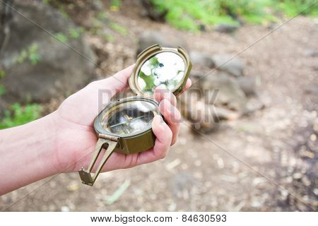 Exploring the forest with a compass in hand
