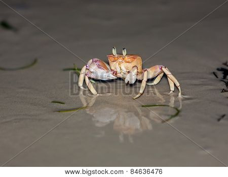 Crab on gray sand