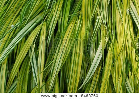 Green Leaf Background In Nature