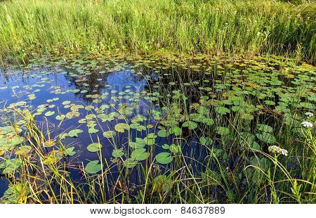 Small Pond With Water Lilies And Grassy Summer Sunny Day