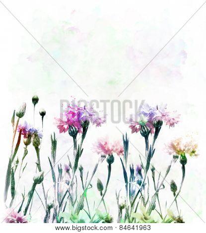 Digital Painting Of Colorful Cornflowers