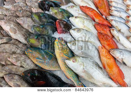 various fishes at the thailand fish market of samui island