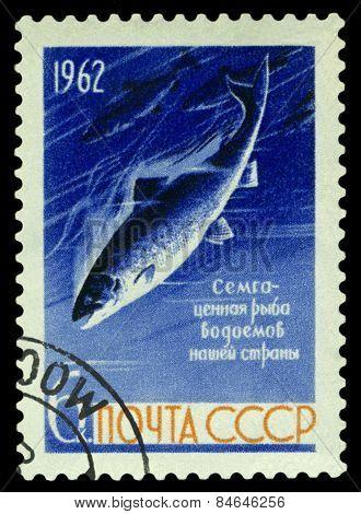 Vintage  Postage Stamp. Fish Freshwater Salmon.