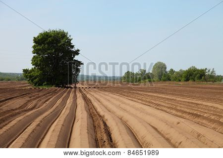 Plowed Field In Spring Day