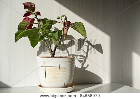Houseplant In A Ceramic Pot