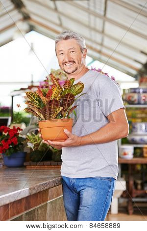 Man as gardener standing with a plant (codiaeum variegatum) in a garden center