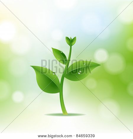 Nature Background With Plant And Drop Water With Gradient Mesh, Vector Illustration