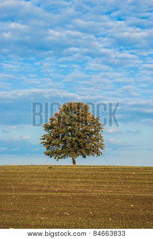 Tree alone in the field