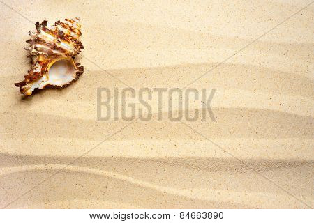 Shell on a wavy sand background