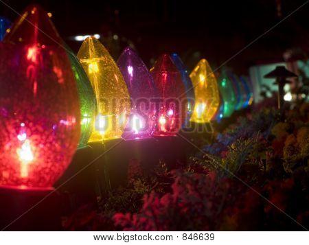 Big Christmas Lights and Plants