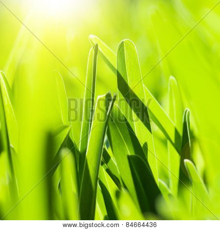 Picture of fresh green grass background, spring nature, lawn on the park in sunny day, bright yellow sun light, abstract natural backdrop, textured wallpaper, soft focus, environment protect concept