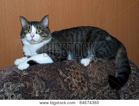 White And Tabby Cat Lying On Back Of Chair