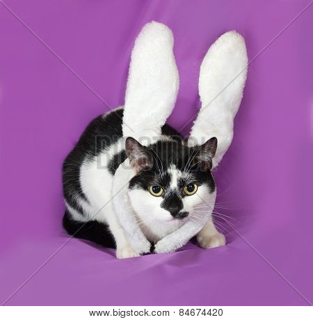 Black And White Cat With Rabbit Ears Carnival Sitting On Lilac
