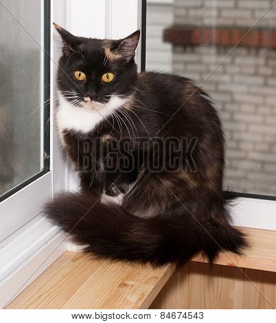Tricolor Cat Sitting On Balcony