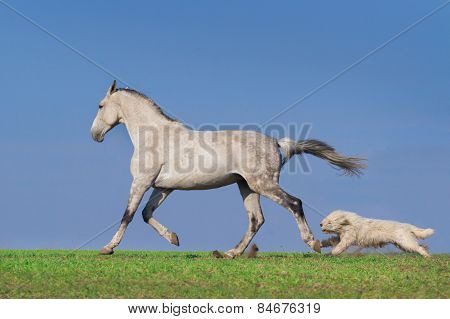 Dog and horse run