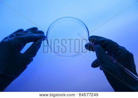 Scientist working with Petri dish in laboratory