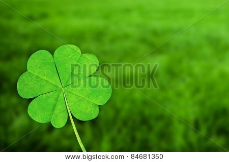 four leaf clover against grass