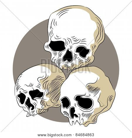 An image of decomposed human skulls.