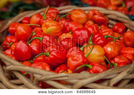 Basket full of fine grown habanero pepper