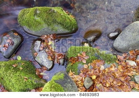 Small autumn leaves in a stream in the valley of Aspe, Pyrenees, France.