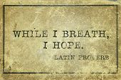 foto of proverb  - while I breath I hope  - JPG