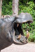 stock photo of hippopotamus  - Hippopotamus showing huge jaw and teeth - JPG