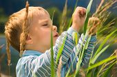 picture of tall grass  - Little boy playing in tall grass - JPG