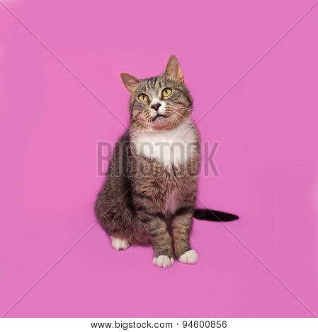 Gray And White Tabby Cat Sitting On Pink