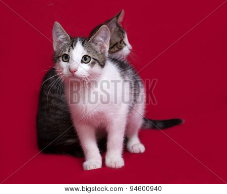 Two Striped And White Kitten On Red