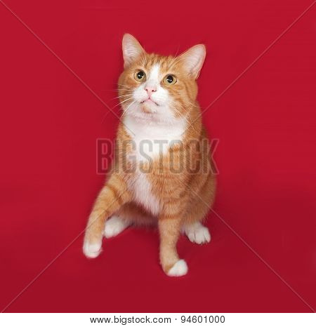Red And White Cat Sitting On Red